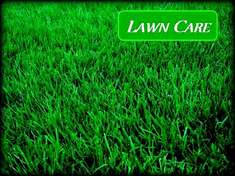 Jons Lawns of Annapolis - Lawn Health - Lawn Care