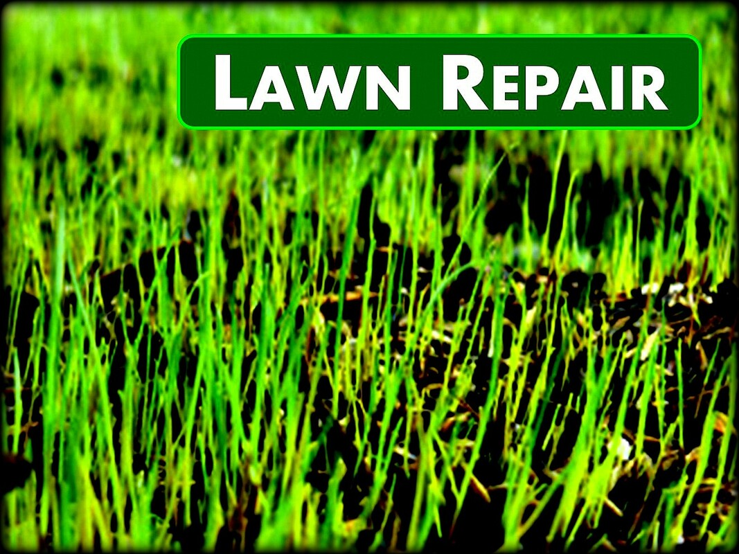 Jons Lawns of Annapolis - Lawn Rejuvenation - Lawn Care